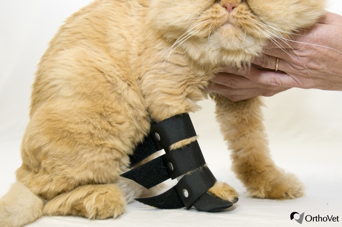 shop for orthovet feline front leg splint orthovet