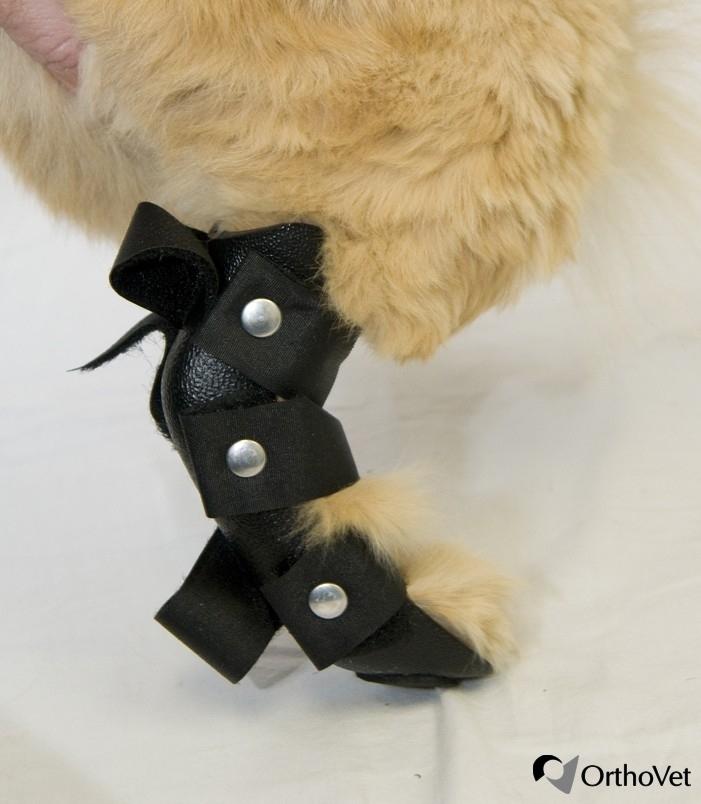 Kittens Lincoln Ne: Shop For OrthoVet Feline Rear Leg Splint